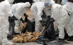bird flu deaths