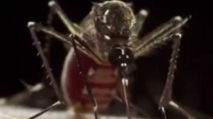 Zika-virus-jpg