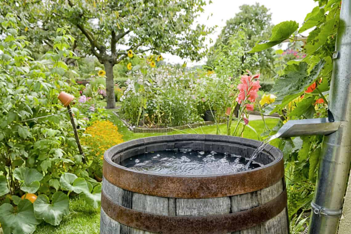 3 Ways To Save Water In Your Garden