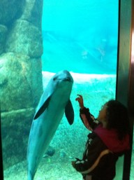 Touching.. at Vancouver Aquarium
