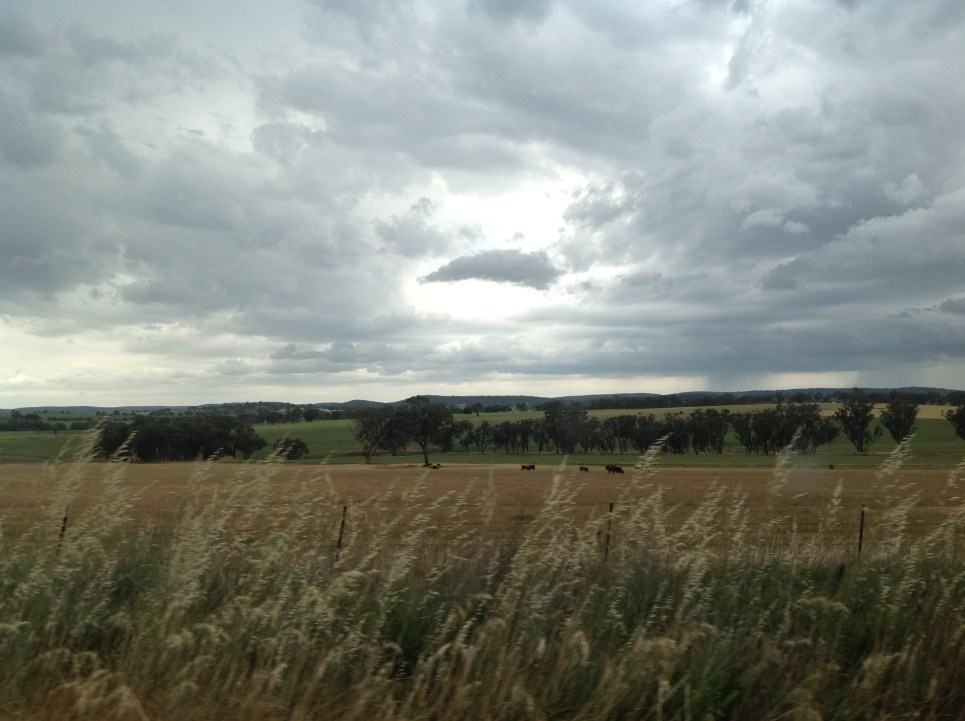 Along the road near Manildra, NSW