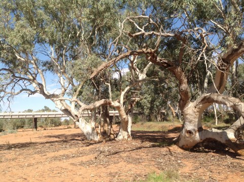 Dry river bed south of Broken Hill, western NSW. Photo: Erle Levey