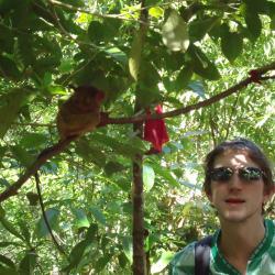 tarsier centre bohol philippines