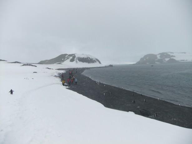 Barrientos Island, Antarctica