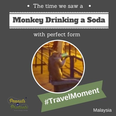 World Travellers: Liz and Josh with a PoP travel moment monkey drinking soda