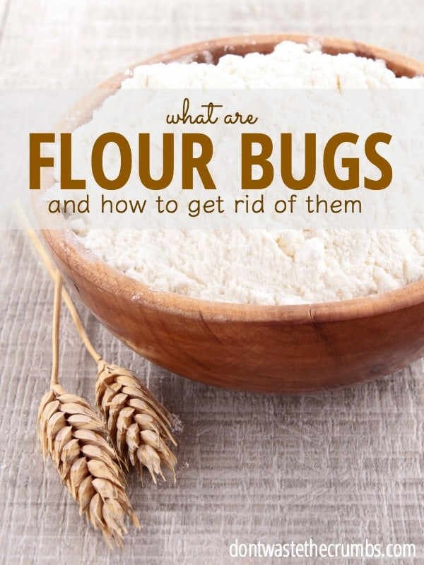 What Are Flour Bugs And How To Get Rid Of Them
