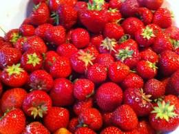 Jeg elsker jordbær
