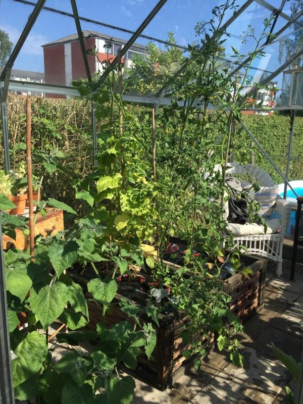 Inde i mit grønne drivhus