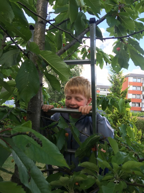 Til tops i kirsebærtræet