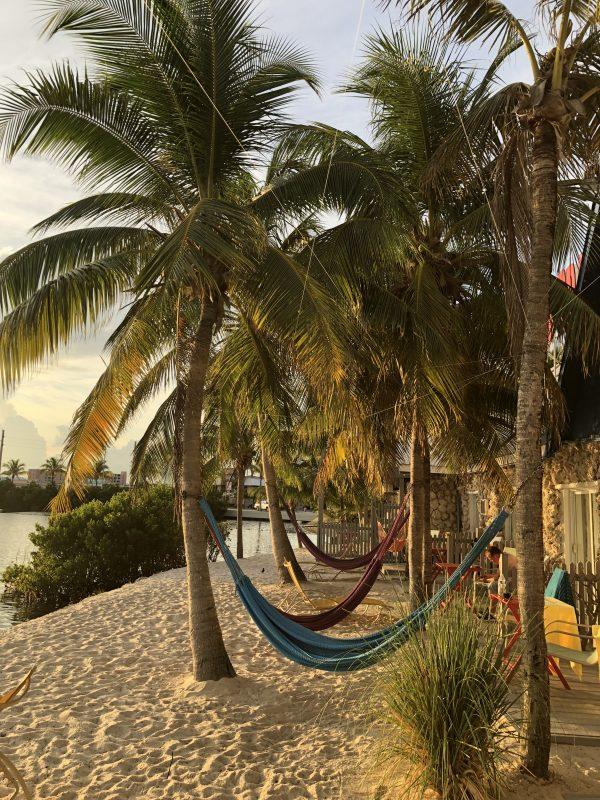 Palmer ved vores hotel i Key West