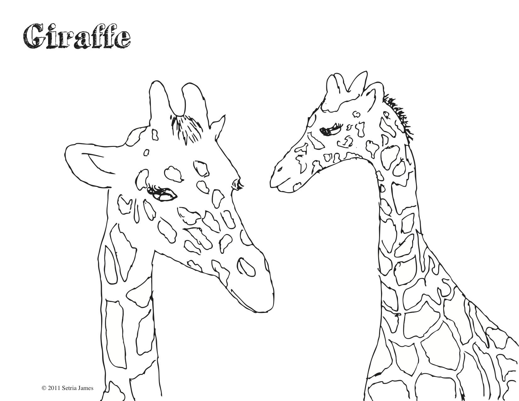 1000+ images about Giraffes on Pinterest