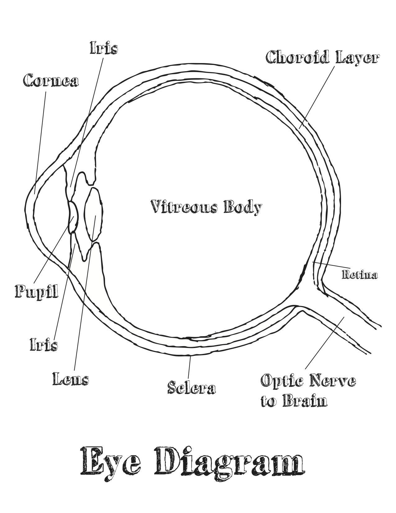 eye labeling diagram quiz clipsal cat6 jack wiring free coloring pages of