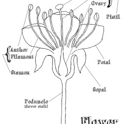 Dicot Flower Diagram Blank Printable Savage Model 110 Parts Heart Coloring Pages