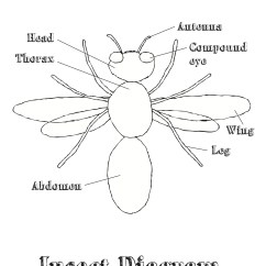 House Fly Anatomy Diagram Meyer Truck Lite Wiring Coloring Diagrams And Worksheets Doodles Ave
