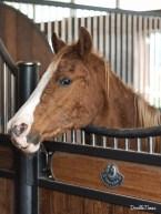 Gnadenbrot für ein Polo-Pony