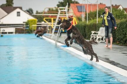 """September - An der Aktion """"Hund im Freibad"""" mussten wir natürlich teilnehmen!"""