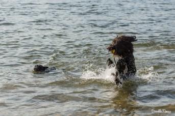 April - Endlich wieder schwimmen im Silbersee in Langenhagen.