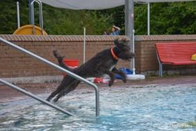 DoodleTimes Hundeschwimmen-12