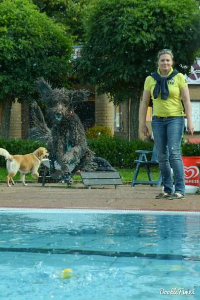 DoodleTimes Hundeschwimmen-3