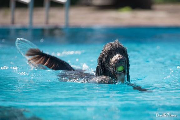 DoodleTimes Hundeschwimmen in Neustadt-15
