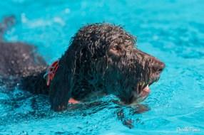 DoodleTimes Hundeschwimmen in Neustadt-21