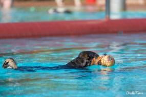 DoodleTimes Hundeschwimmen in Neustadt-27