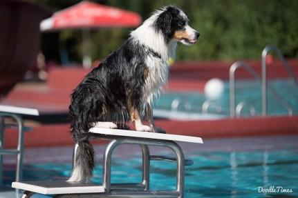 DoodleTimes Hundeschwimmen in Neustadt-4