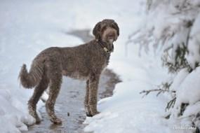 Baloo findet sogar im Schnee noch Wasser...