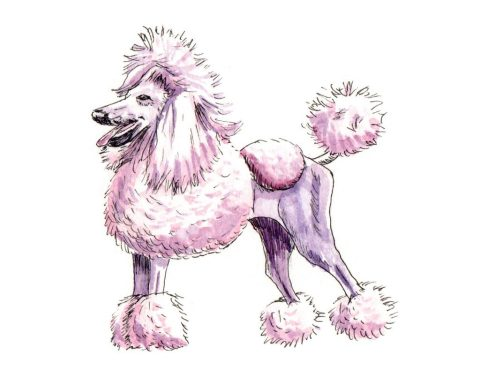 French Poodle Doodlewash by Charlie O'Shields