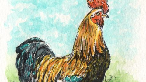 Le Coq Gaulois Watercolor by Charlie O'Shields