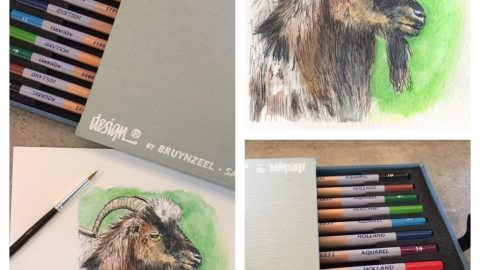 Some Goat In France Aquarelle Pencils