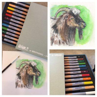 Some Goat In France Aquarelle Pencils