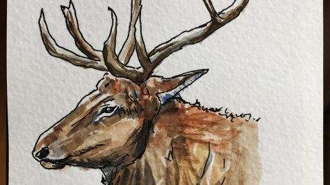 Missouri Elk