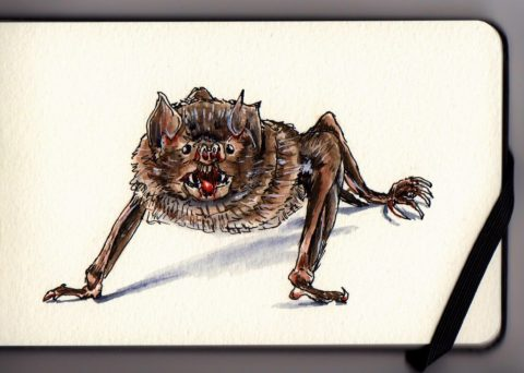 Vampire Bat by Charlie O'Shields