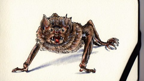 Vampire Bat by Charlie O'Shields