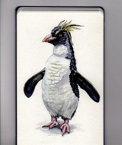 Rockhopper Penguin by Charlie O'Shields - Doodlewash