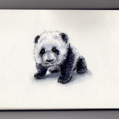 Tiny Little Baby Panda Doodlewash