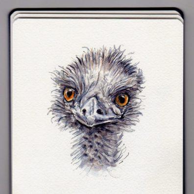 Emu Doodlewash by Charlie O'Shields