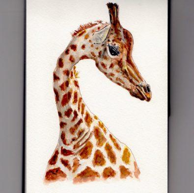 Giraffe Doodlewash