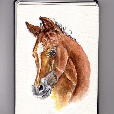 Horse Doodlewash