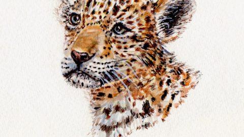 Baby Jaguar Doodlewash