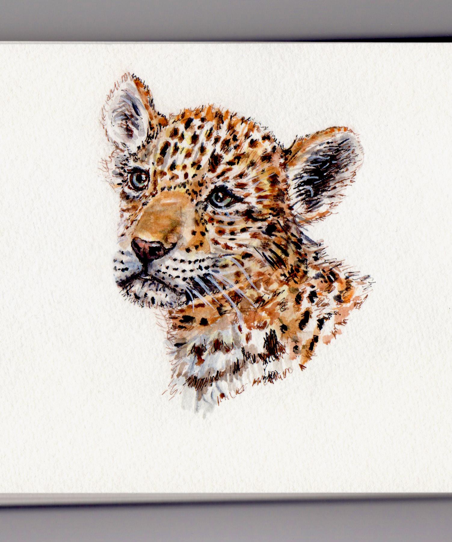 Doodlewash J Is For Jaguar