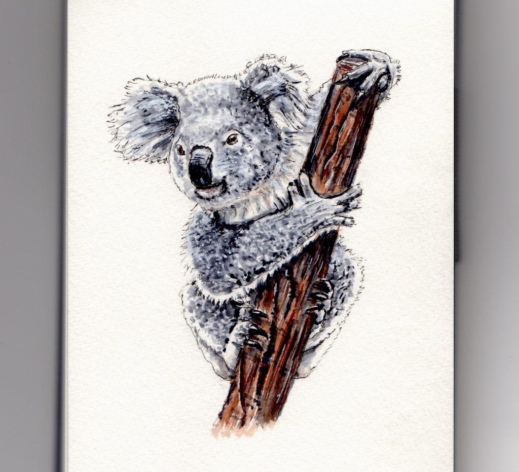 Koala Doodlewash