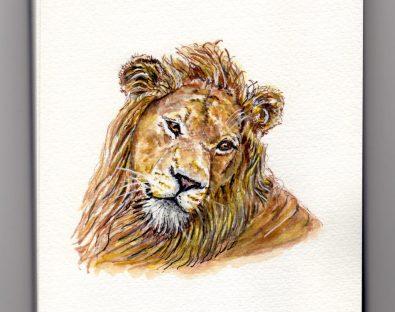 Lion Doodlewash