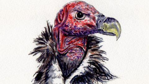 Vulture Doodlewash