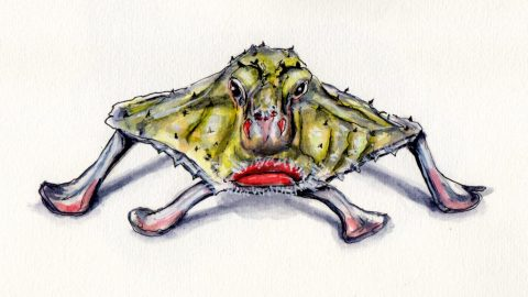 Red-Lipped Batfish Doodlewash - watercolor sketch of the walking fish of the Galapagos Islands