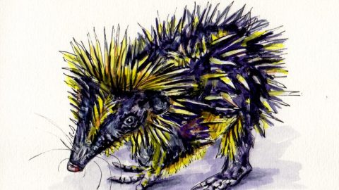 Lowland Streaked Tenrec Amazing Weird Animal from Madagascar with spikes watercolor sketch