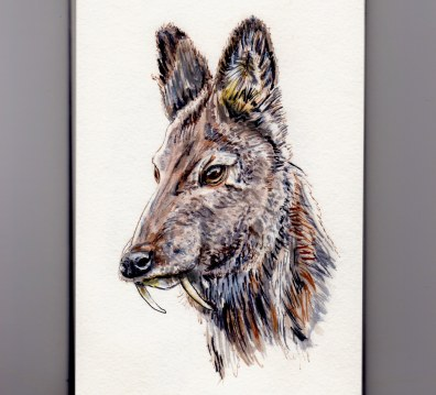 Vampire Deer - Siberian Musk Deer Doodlewash in watercolor asian deer Kashmir