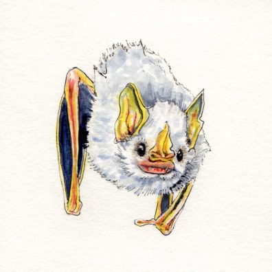 The Honduran White Bat - Doodlewash watercolor sketch and painting of white bat with yellow ears