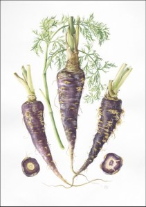 Revolutionary Carrots, a watercolour painting of three purple carrots by Shevaun Doherty (Doodlewash)